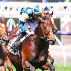 Big punters love to bet on Australian horse racing